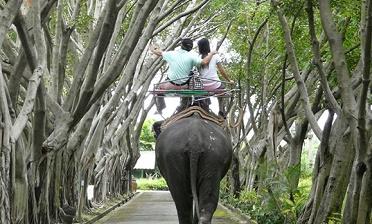 泰國曼谷三攀大象鱷魚表演園門票